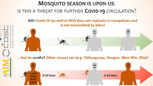 No risk of COVID-19 from mosquitoes