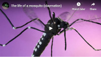 Aedes Life cycle thumbnail